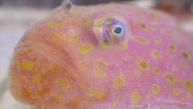 深海魚と極上ラミレジ入荷
